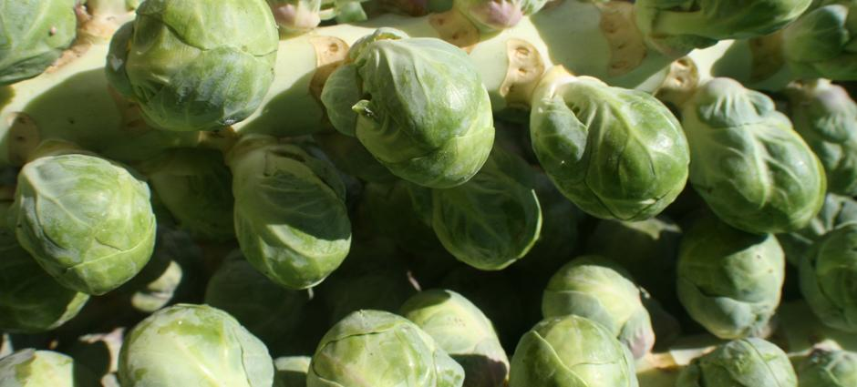 Brussel Sprouts (1)